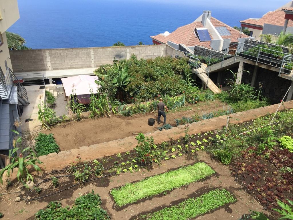 Un piccolo orto sulle vallate del Nord di Tenerife 'zona La Orotava'