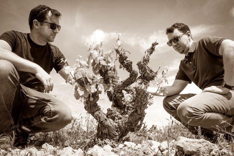 vino spagnolo biologico vida liquida bodega sentencia e eclectic vins